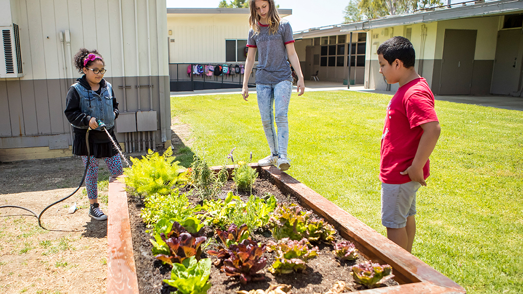 three students water a garden bed